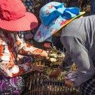 Kep Crab Market - I