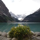 Lake's Flowers