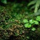 The Pentax Green