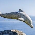 Delfín de Finisterre