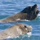 'Swimming Buddies'
