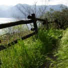 Fence over the lake