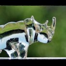 Reflections of a glass Rhino