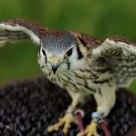 One of them birds of prey