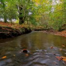 Small river in New Forest