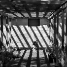 Greenhouse Light Patterns