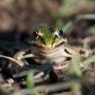 Kiss the frog.....