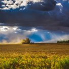 The Harvest Before the Storm