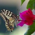 Il fiore e la farfalla