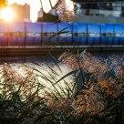 Autumn - Backlight
