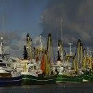 Harbor off Oudeschild