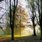 Morningsun in my backyard.