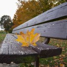 Leave on the Park Bench