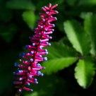 Matchstick Plant