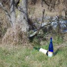 Two wine bottles relaxing under a tree