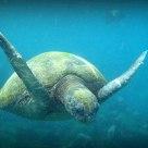 Sea turtle hitting me