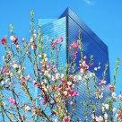 Peach in Osaka