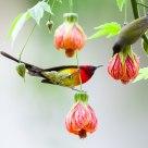 Couple Sun Birds