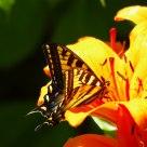 Nectar Sweet Nectar