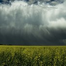 Storm over canola I