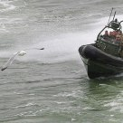 Marine rafting