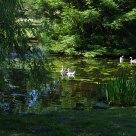 Swan Lake-Not