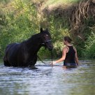 Horsebathing