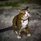 Sweety cat