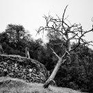 arbre 6288